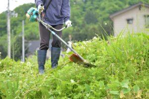 田辺市で草刈りに最適な年3回の時期~楽に草刈りを終えるコツまで徹底解説