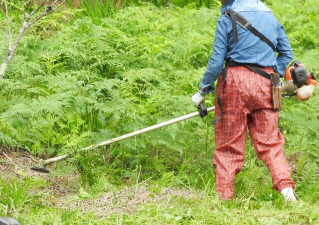 かつらぎ町で草刈りにかかる料金相場は?追加料金や業者選びのコツまで解説