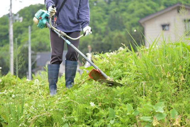 かつらぎ町で草刈りに最適な年3回の時期~楽に草刈りを終えるコツまで徹底解説